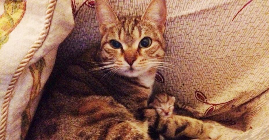 """【いつも、ありがとう!】ご飯をくれた男性への、野良猫からの """"サプライズ"""" とは…? (3枚)"""