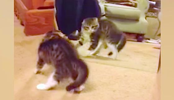 """初めて鏡と対面した子猫ちゃん♪ その驚きっぷりがとっても""""リズミカル"""" だった…Σ(゚Д゚;)!"""