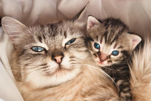【猫の繁殖】 いつ交尾するの?どうやって?