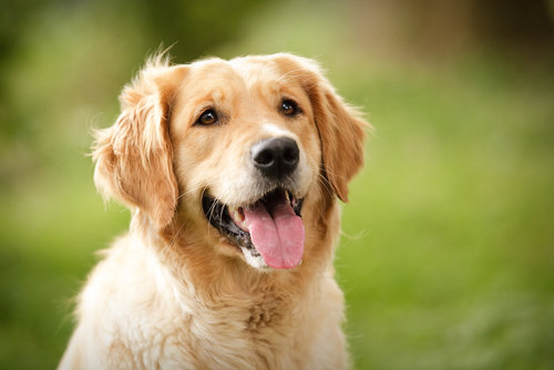 【ねばねば健康食】犬に山芋って食べさせても大丈夫?