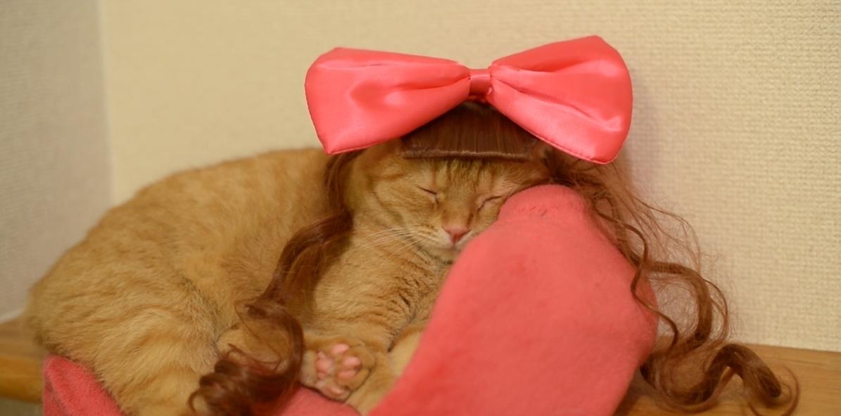 【コスプレ猫にキュン!】きゃりーぱみゅぱみゅに大変身!?カツラを付けた猫ちゃんに萌え!
