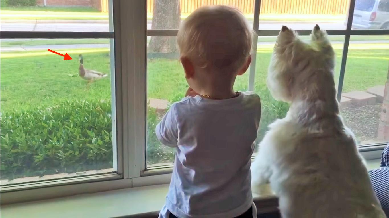 【まるで兄弟】庭のカモを眺める、ワンコと男の子。ふたりの背中がそっくり過ぎて、笑っちゃう♡