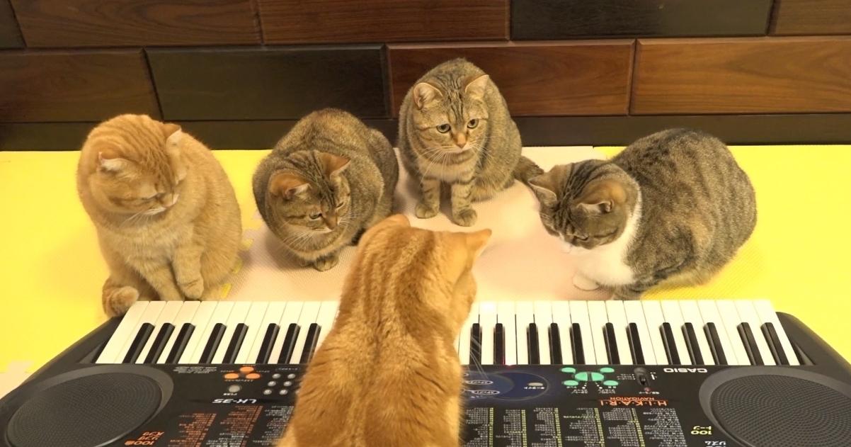 【ピアノの演奏は任せてニャ♪】奇跡のピアニストにゃんこ登場!?