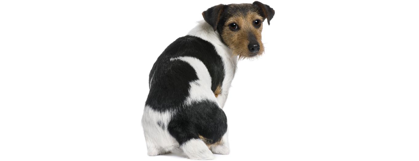 【謎】愛犬が「おしりをくっつけてくる」のは何故?→ 嬉しくなるような理由がありました(ノ´∀`*)