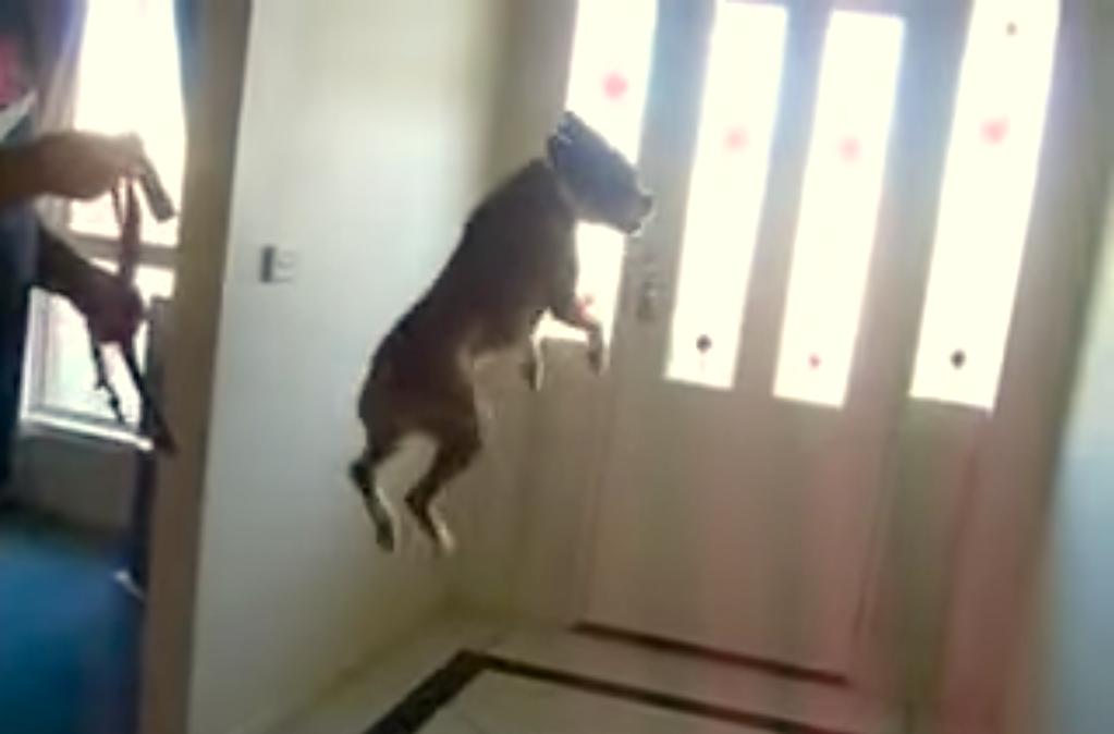 愛犬の「お散歩ヤッホーイ!」状態が激しすぎた…♡ 心からの感情表現にやられる30秒 (〃∇〃)