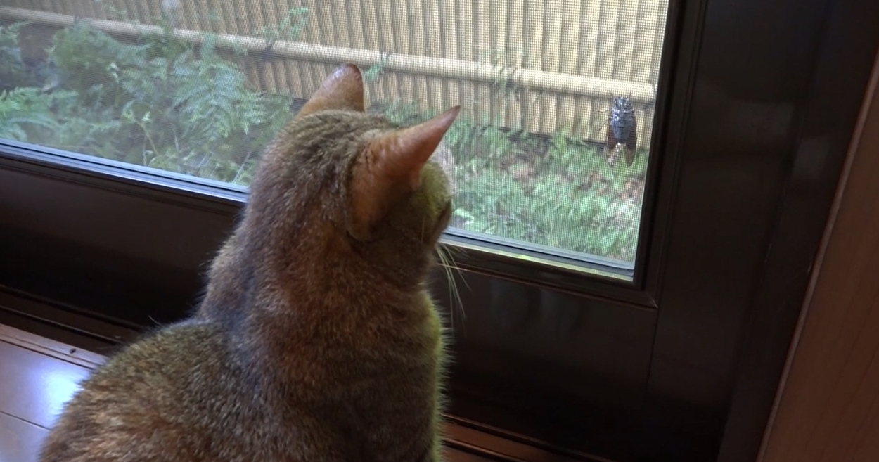 【この物体は一体なんだニャ!?】窓に止まるセミを追いかける!好奇心旺盛なにゃんこたち