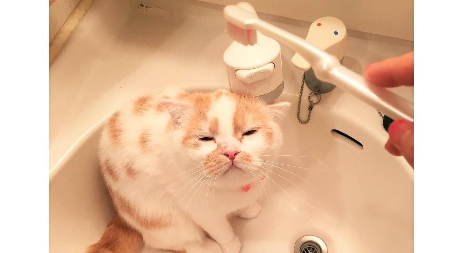 """歯ブラシで""""お顔""""を磨いて貰うのが、大好きなねこ。念願の「シャコシャコ」の瞬間がくると…♡4枚"""