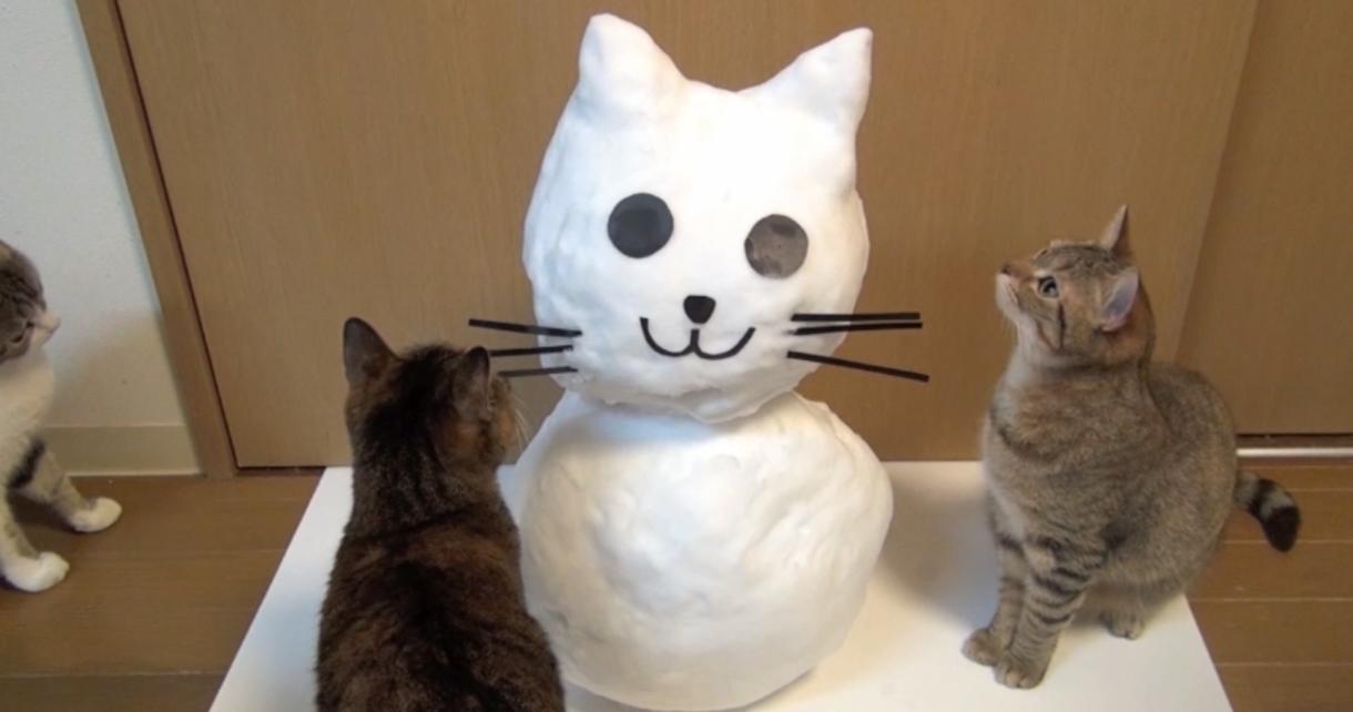 【新しいお友達だよ!】猫型雪だるまと一緒に遊ぶ猫。おヒゲが取れちゃった…!?