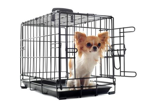 犬のケージの必要性と、選ぶ時のポイントについてのまとめ