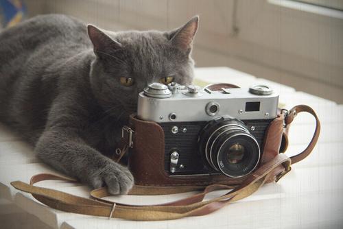 """これであなたもネコスタグラマー☆ 猫を上手に撮影するための""""5つ""""のポイント!"""