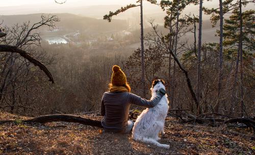 愛犬と楽しむキャンプ! ペット歓迎のキャンプ場をご紹介