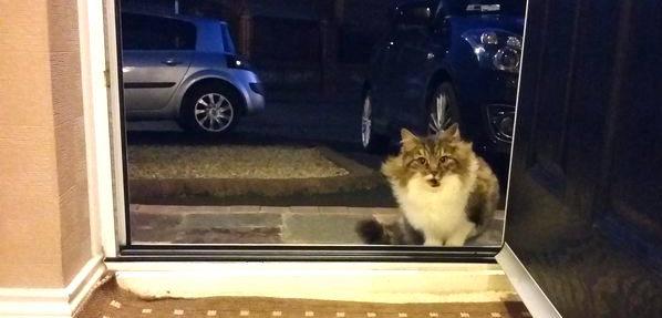 """『家に入れてほしい』と懇願していた猫。保護して分かった """"彼女が必死だった理由"""" とは(8枚)"""