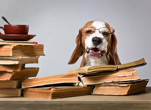 犬|私達の永遠のパートナー『犬』の飼い方・習性・特徴の全て