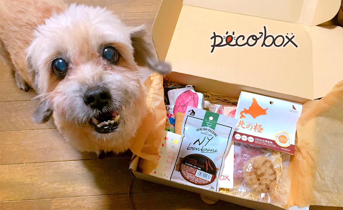 ☆PECOBOX8月号販売終了☆ 次回9月号のテーマは【秋の催しもの】♡