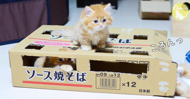 【ぎこちない猫パンチ】下から何か出てくるニャ~!もふもふ☆仔猫のもぐらたたき