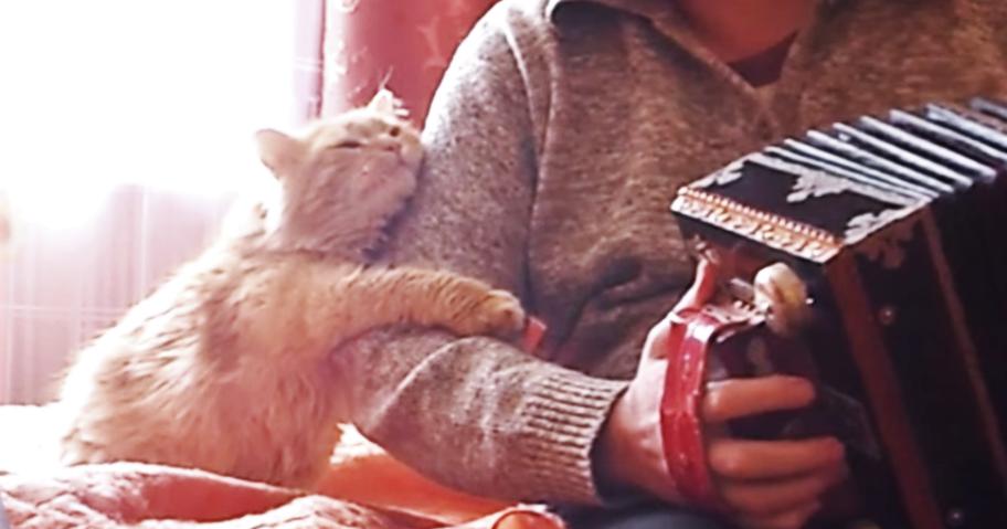 愛猫のためにアコーディオンを演奏した → ニャンコからの『愛情のお返し』が、かわいすぎた♡