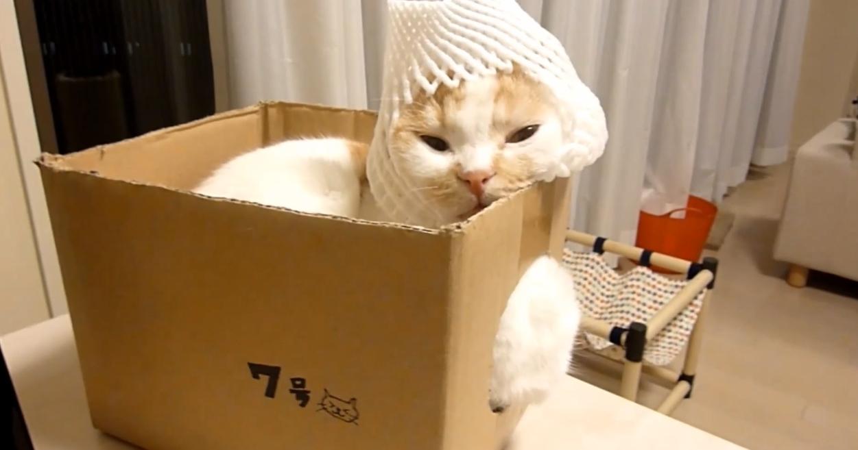 【落ち着くニャ】狭いところが大好きな猫ポッケ。今日はどこに潜り込む…?