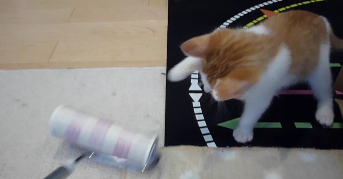 【何ニャこれ!?】初めてのコロコロに、猫がとった行動とは…!?