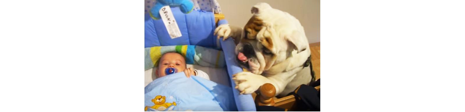 『赤ちゃんの傍に近づきたい!』必死に考えたワンコのとった行動が… 可愛すぎてキュン♡