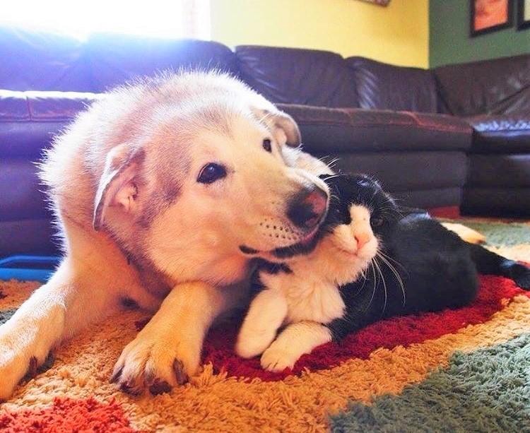 保護施設で、一生を終えると思われていた猫。20歳にして「新しい家族」として迎えられた結果…♡