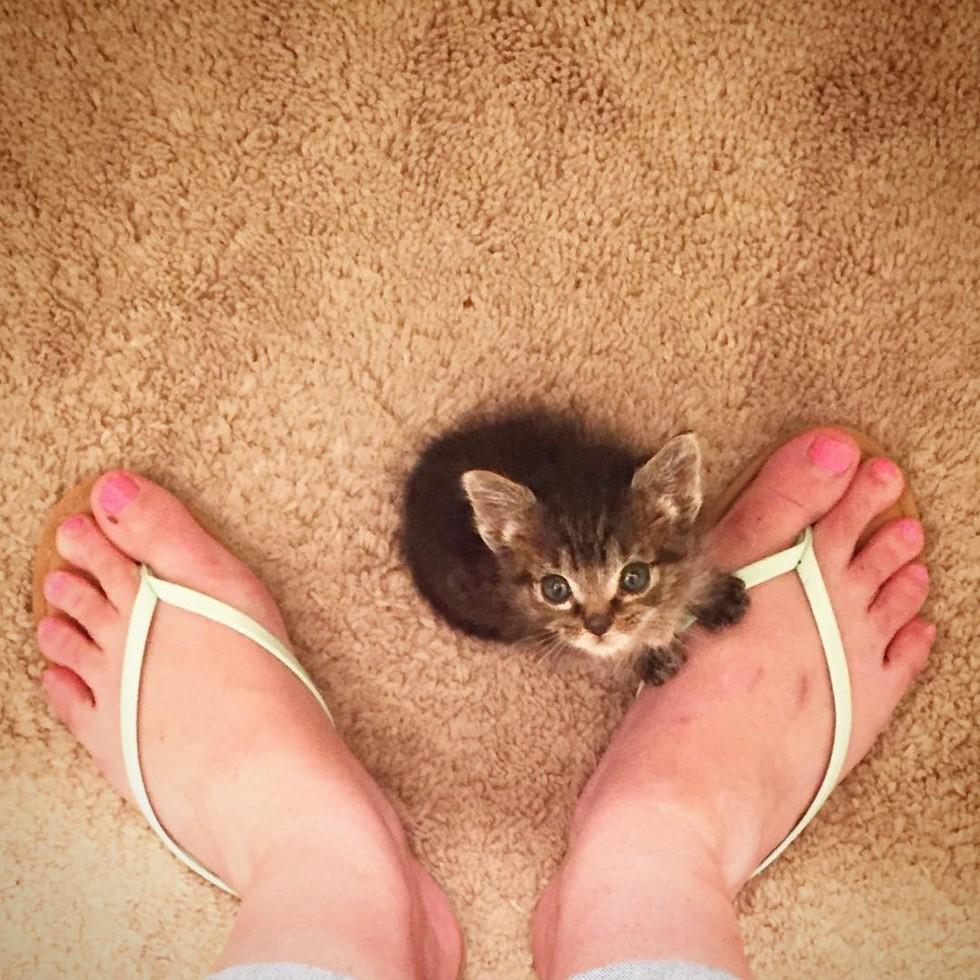 """生まれてすぐに、母と兄弟を失った子ネコ。新しい """"お母さんネコ"""" の愛で、幸せを手に入れる(6枚)"""