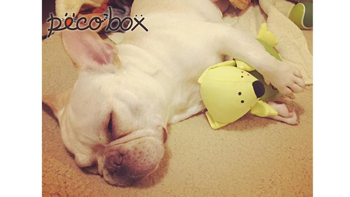 《PECOBOX9月号販売終了》 次回10月号のテーマは『運動会』! 愛犬と、スポーツを楽しもう☆