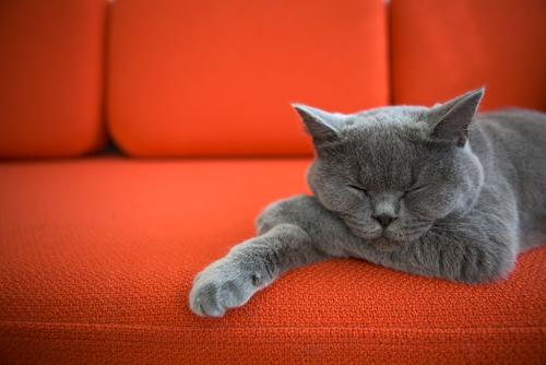 猫に近づくとくしゃみや目のかゆみが…もしかして猫アレルギー? 症状・対策について