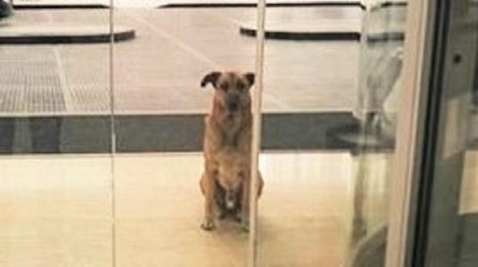 【もう一度会いたくて】遊んでくれた女性のことを、何ヶ月も待ち続けた野良犬。そして遂に…♡ 6枚