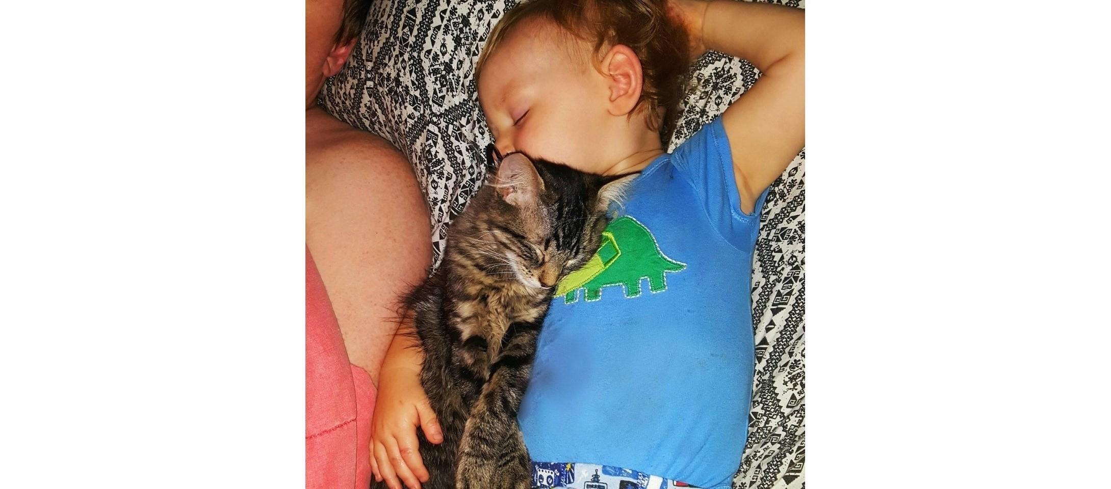 ひとりぼっちで鳴いていた子猫を、保護したら… → 息子にベッタリ、仲良し兄弟になりました♡ 6枚