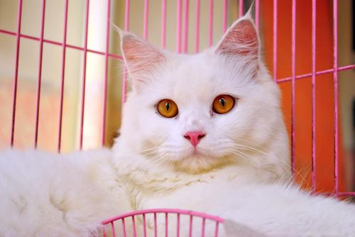 猫に合ったゲージを探す! 猫に必要なゲージの条件とは…!?