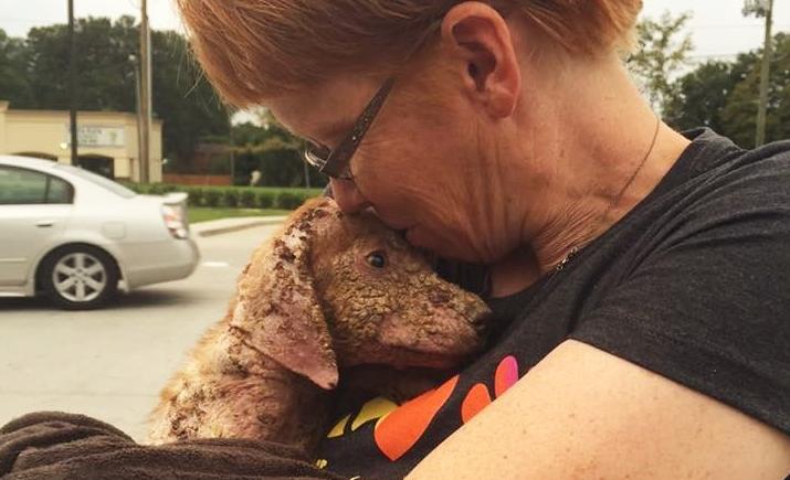 トラックから投げ捨てられ、体も心も傷だらけだった子犬。彼女を救ったのは、ある女性の優しさでした