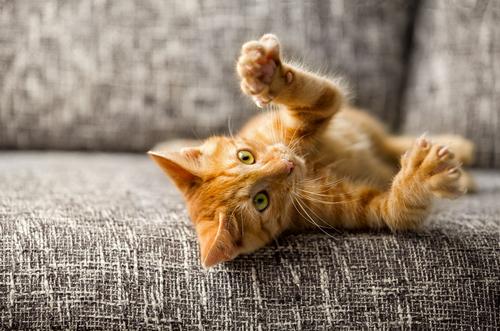 繊細できまぐれ! 猫のしつけってどうすればいいの?