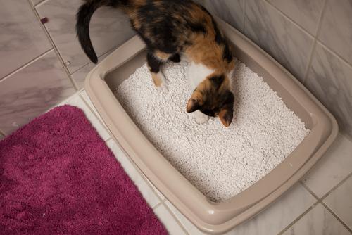 猫のトイレに敷く猫砂、どれを選べばいいの?