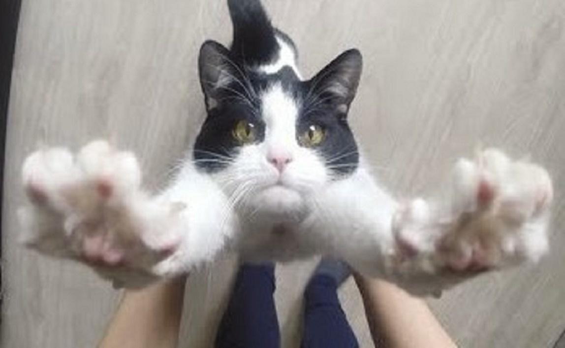 保護された猫。必死に看病してくれた飼い主さんに、超甘えっ子な『だっこ猫』になる(*´ェ`*)♡