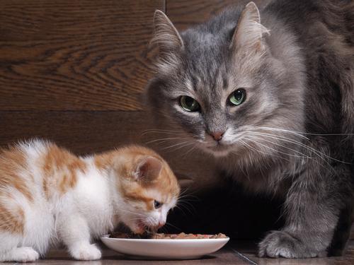 猫を飼うなら知っておきたい  猫の妊娠・出産について