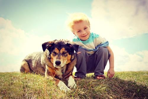 猫のペット保険についての基本まとめ。メリットは? どれを選べばいいの?