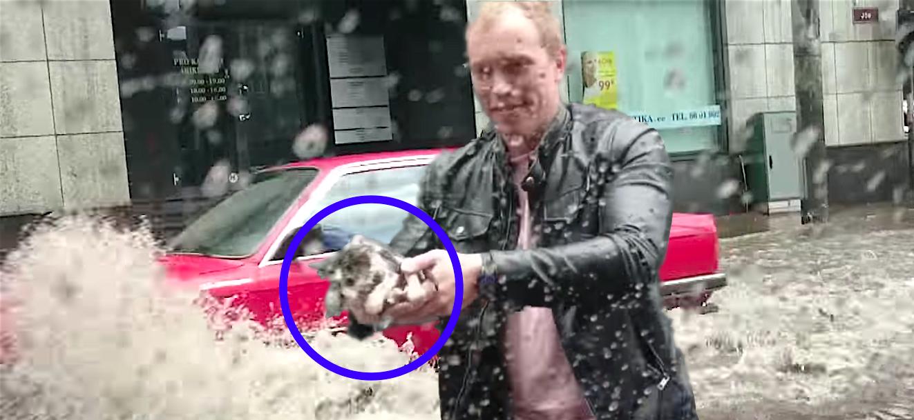 大雨の中、溺れそうだったところを発見された子ネコ。小さな命の救出劇に胸が打たれる。