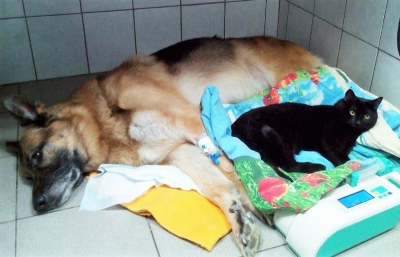 【大丈夫ニャ】後足が動かなくなってしまった黒猫。動物病院の患者さんたちを励まし続ける存在に…(8枚)