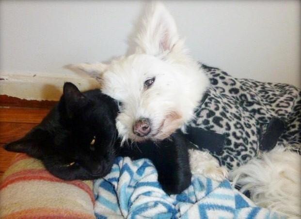 保護施設でずっと孤独だった1匹の老犬が、ある子猫と出会い、しだいに心を開いていく様子(8枚)