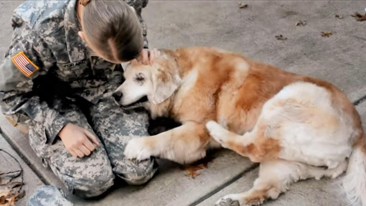 飼い主さんと、3ヶ月ぶりに再会した高齢犬。子犬に戻ったかのように甘える姿に、胸が熱くなる♡