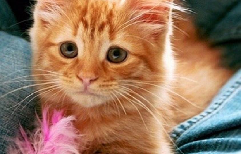 人間を見ると、怯えた表情で逃げ出していた子ネコ。→ それから8年、彼の表情は…♡(5枚)