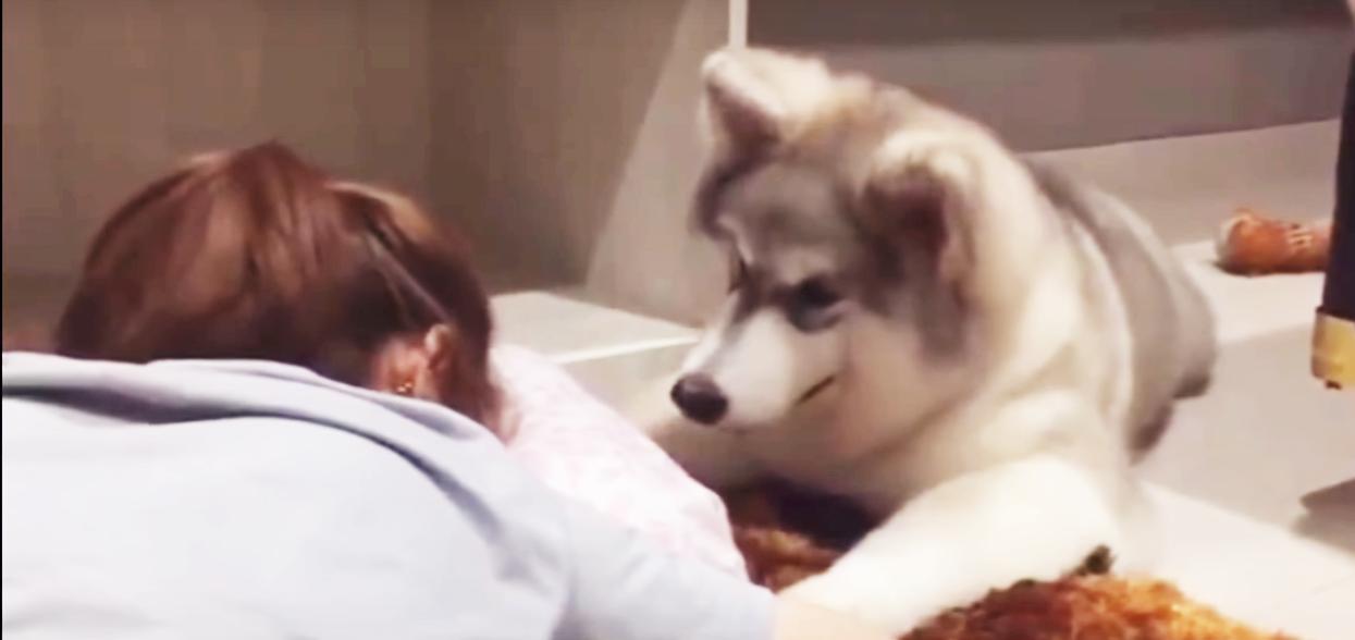 『ママ泣かないで…』落ち込んだ様子の飼い主さんを見たワンコがとった行動に、心がじんわりする。