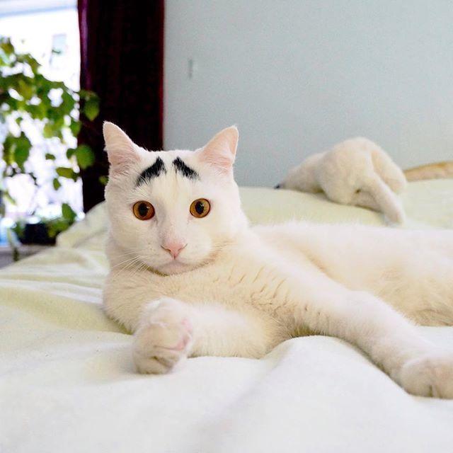 【まゆげ猫♡】眉毛の模様をもつ白猫サムくん。表情豊かな「困り顔」に、心癒される…♡