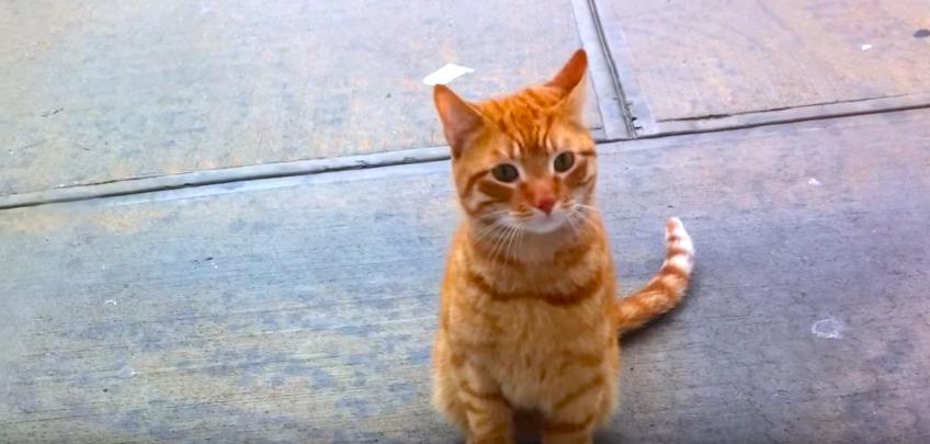 【ぼくを拾ってにゃ】窓の外から切なげな表情でアピールする野良猫。窓を開けてみたら…