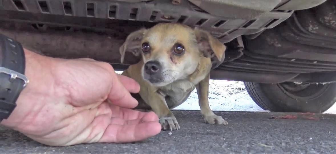 交通事故に遭い、飼い主さんとはぐれてしまった犬。再会した瞬間の、嬉しそうな姿に胸が熱くなる