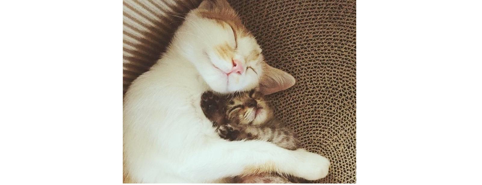 母猫とはぐれ独りぼっちだった子猫。彼女を一生懸命にお世話する、先住猫の優しさに心温まる(7枚)