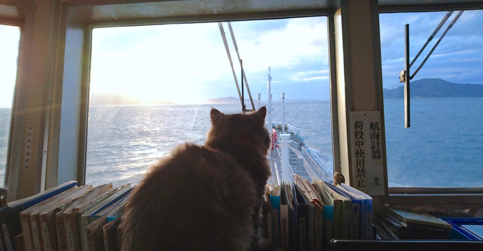 【海のニャンコ♡】ねこ船長として貨物船に乗る、小さな船員がカワイすぎると話題に(〃∇〃)