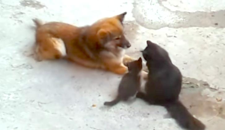 親友だったワンコに、子猫をはじめて紹介したら → ワンコの見せた反応に、胸がキュンとする♡