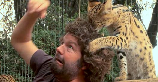 """国立公園で撮影中、カメラマンが押さえ込まれた…!→ ヤマネコによる""""毛づくろい""""が開始(*´艸`*)"""