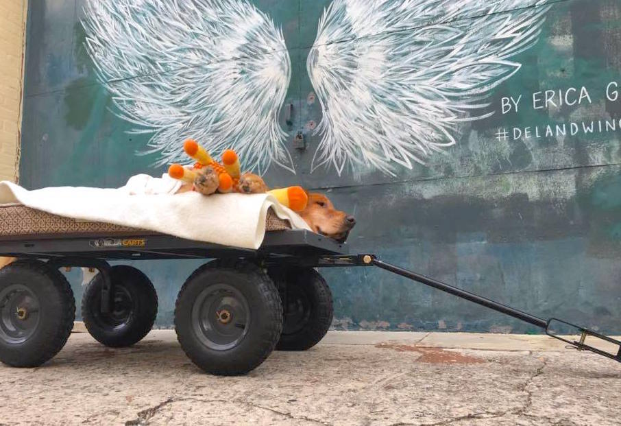 ガンで寝たきりの愛犬のため、台車を使って毎日散歩に連れて行ったら… 飼い主の想いが伝わった!